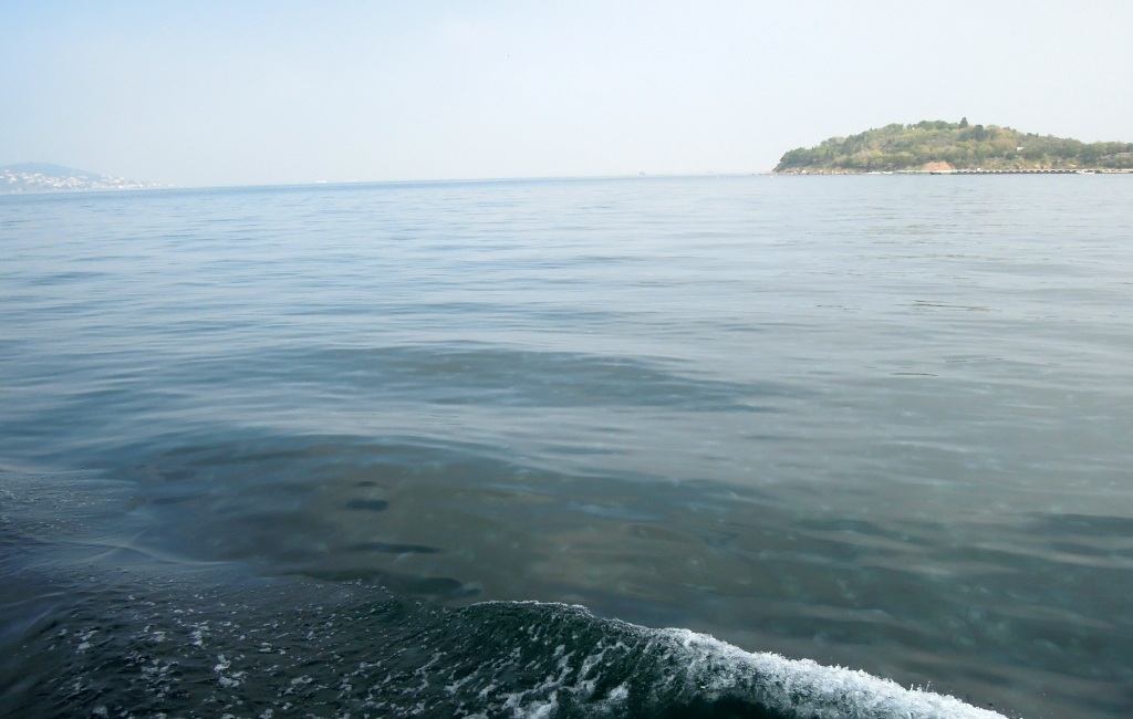 Jellies in the Sea of Marmara, near the Princes Islands, Istanbul
