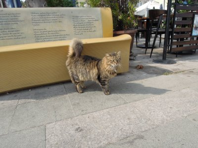 Fluffy cat and waterfront bench, Heybeliada, Princes Islands, Istanbul