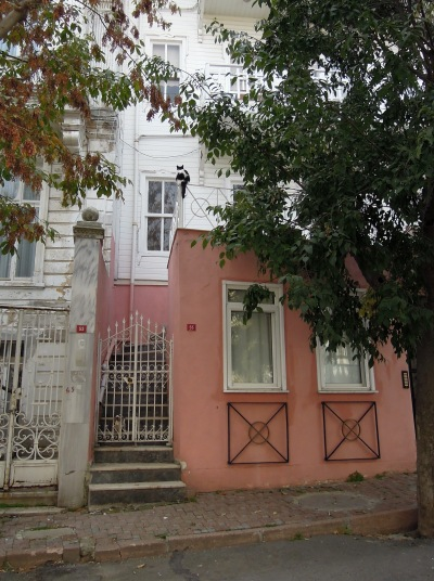 Cow cat perched above a pink building, Heybeliada, Princes Islands, Istanbul