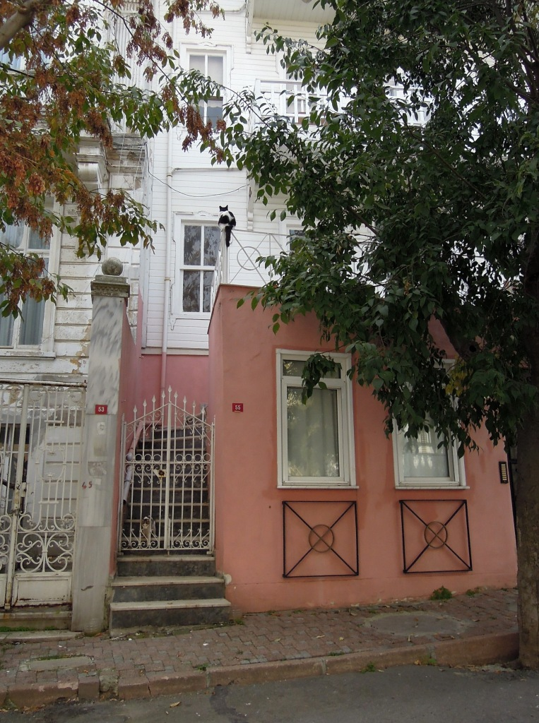 Cow cat perched above pink house, Heybeliada, Princes Islands, Istanbul