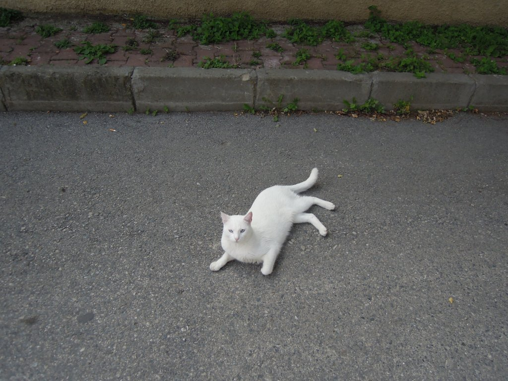 White cat, Heybeliada, Princes Islands, Istanbul