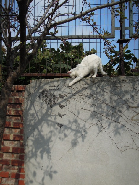 White cat and street art, Heybeliada, Princes Islands, Istanbul