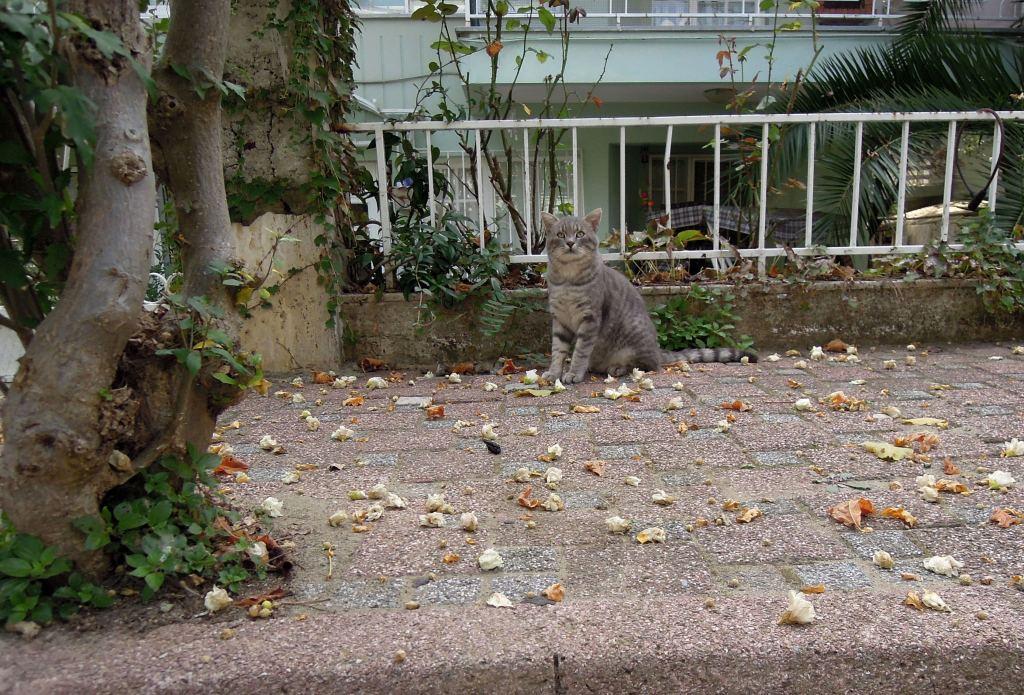 Grey cat, Heybeliada, Princes Islands, Istanbul