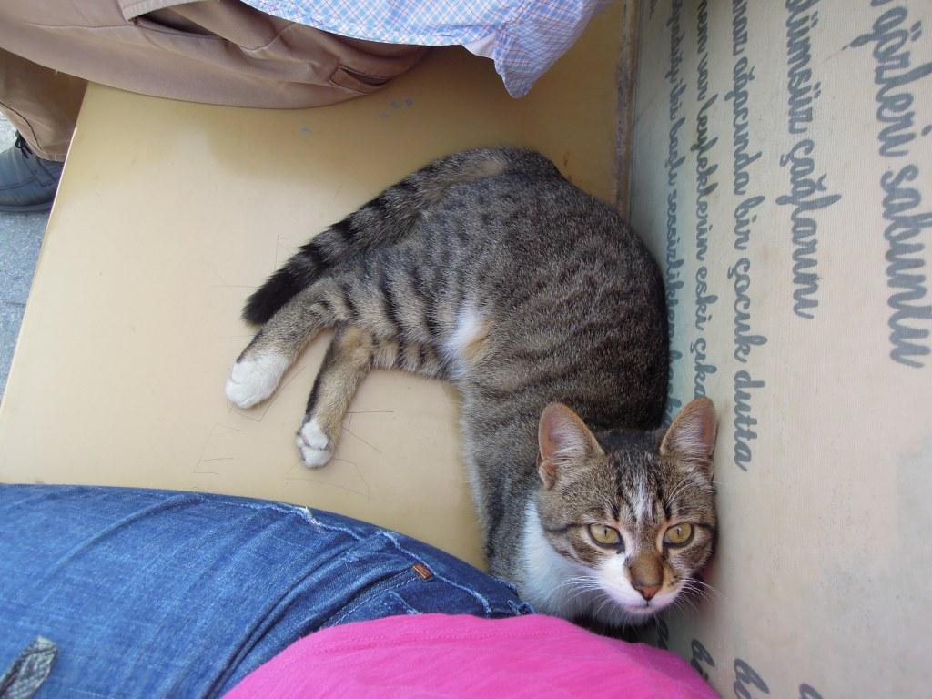 Friendly local cat, Heybeliada, Princes Islands, Istanbul
