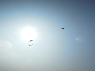 Seabirds in the sky against the sun
