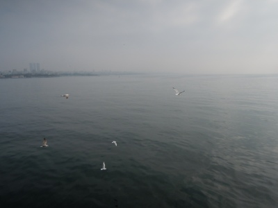 Seagulls over an overcast Sea of Marmara, with city skyline in the distance