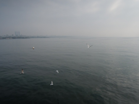 Seagulls over an overcast Sea of Marmara