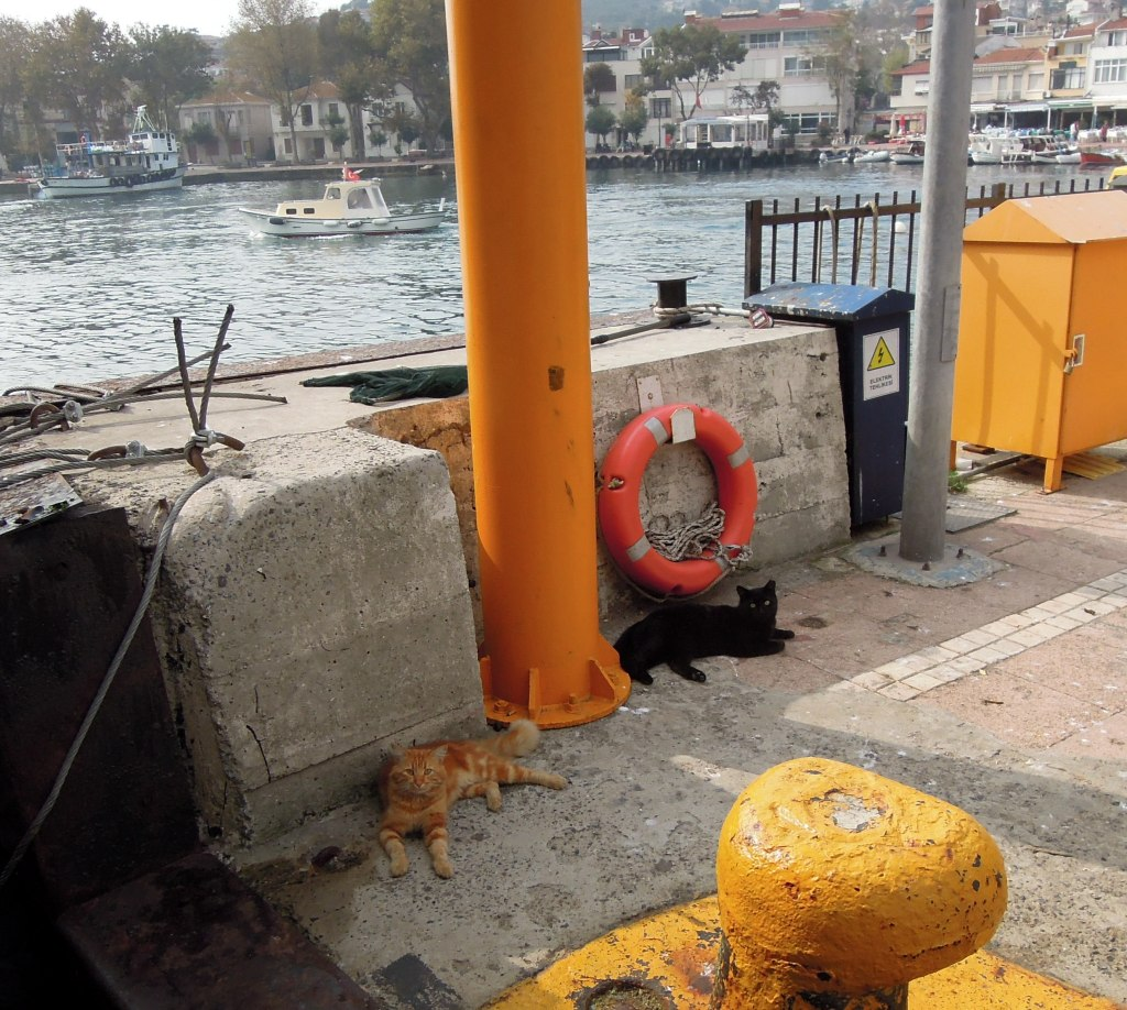 Cats on Burguzada pier, Princes Islands, Istanbul