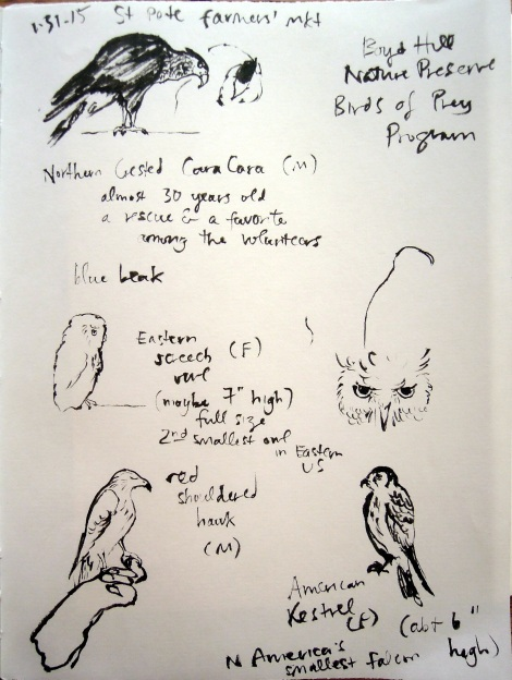 Boyd Hill Nature Preserve Birds of Prey Program at the St Petersburg farmers' market. Northern Crested Cara Cara, Eastern screech owl, red-shouldered hawk, American kestrel. Sketches by Lisa Hsia.