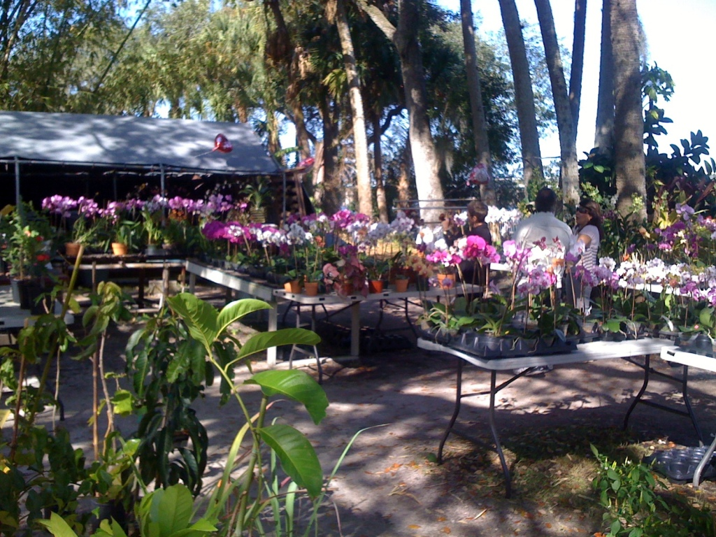 Orchids for sale at Wat Mongkolrata Temple, Tampa, Florida.