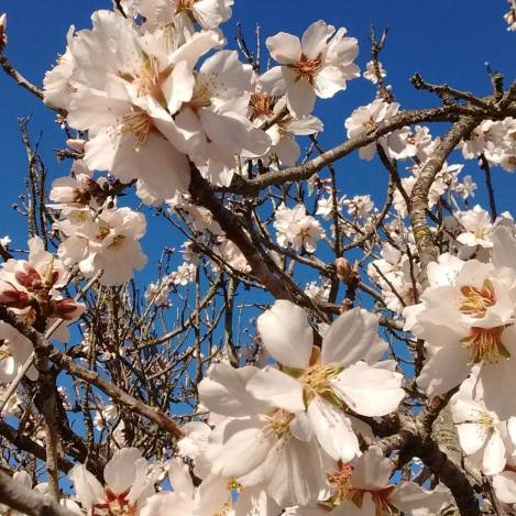 Spring blossoms in Oakland, CA