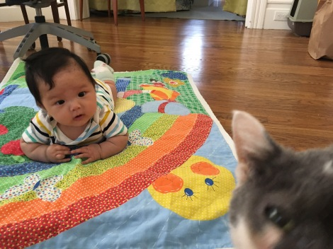 four month old Ada looking at Lyapa (the cat)