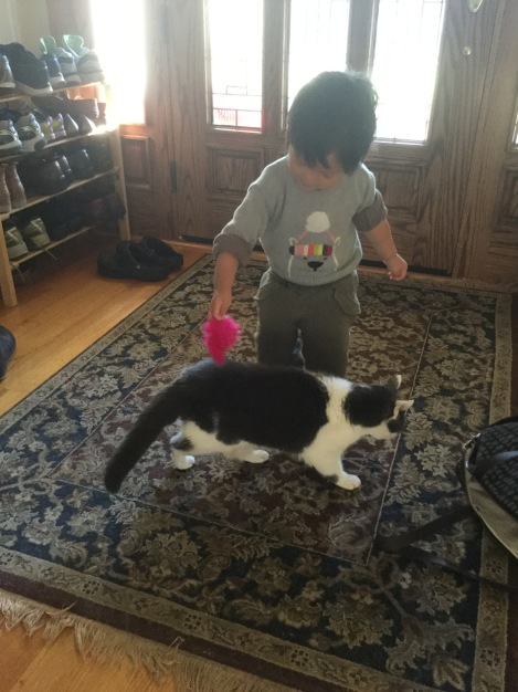 Toddler playing with a cat