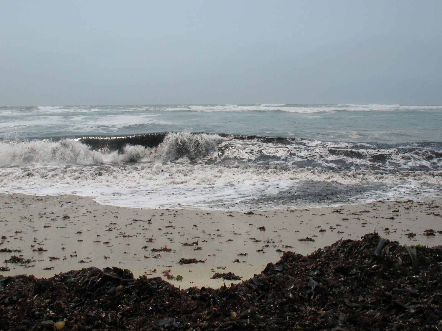 A wave rolling toward a kelp-covered beach, Half Moon Bay, CA