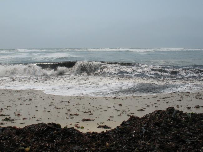 A wave rolling toward a kelp-covered beach, Half Moon Bay, CA