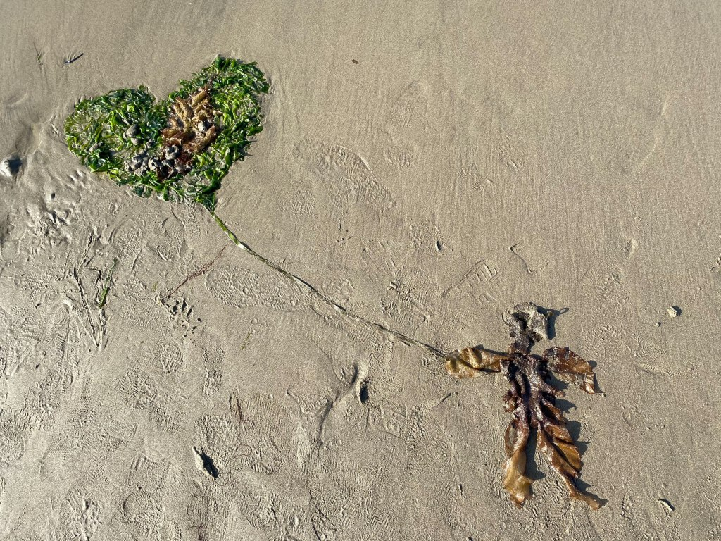 Seaweed on damp sand, arranged into the shape of a person holding a heart balloon